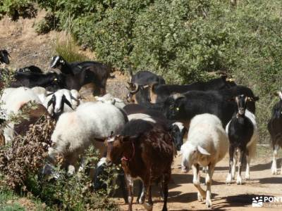 Real de San Vicente; fruto del tejo grupos de montaña madrid asociacion senderismo madrid videos de